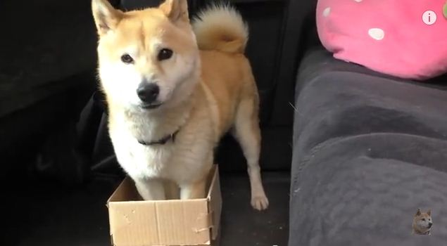The Dog and His Shrinking Box
