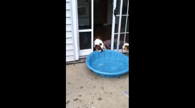 Gus REALLY Wants an Indoor Pool