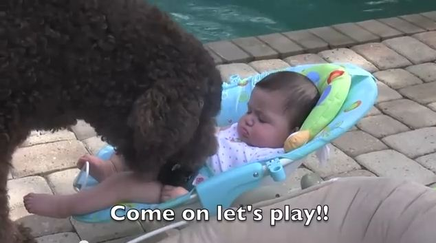 He Just Wants His New Tiny Human Friends To Play Fetch…And He Won't Give Up!