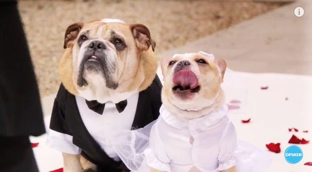 John Legend Sings At A Dog Wedding For Charity