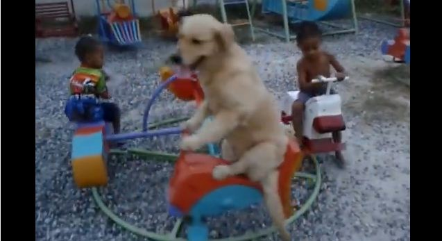 Dog Loves To Ride The Carousel With His Little Human Friends
