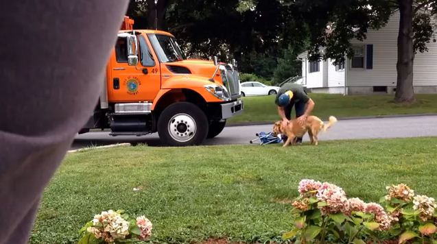 Hidden Camera Shows How This Dog Reacts When The Garbage Man Stops By (It's Awesome)