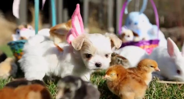 The Only Thing Cuter Than A Puppy Is One That's Best Friends With A Bunch Of Chicks