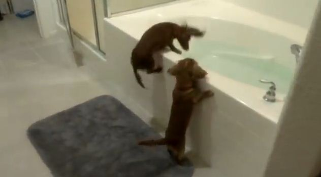When It's Bath Time, These Dogs Have An Adorably Hilarious Reaction