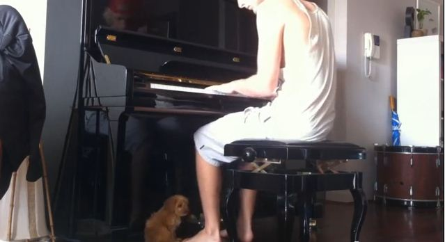 Every Time He Stops Playing The Piano, His Puppy Does Something Ridiculously Cute