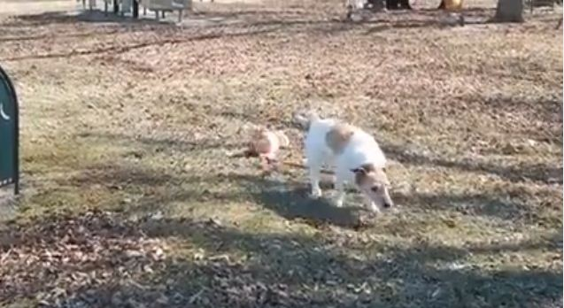 He Just Wanted To Go For A Walk, But Someone Hilariously Kept Getting In The Way