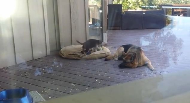 Wait Til You See What This Mama Dog Does When Her Puppy Refuses To Nap