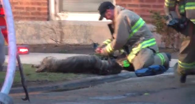 A Dog Was On The Brink Of Death Until A Heroic Firefighter Stepped In – I'm In Tears