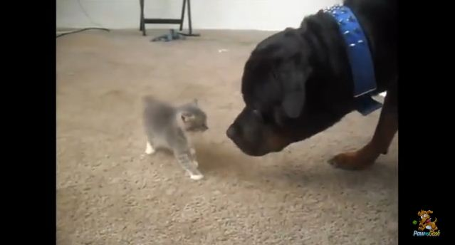 When These Cats & Dogs Met For The First Time, Tension Was High…And Hilarious
