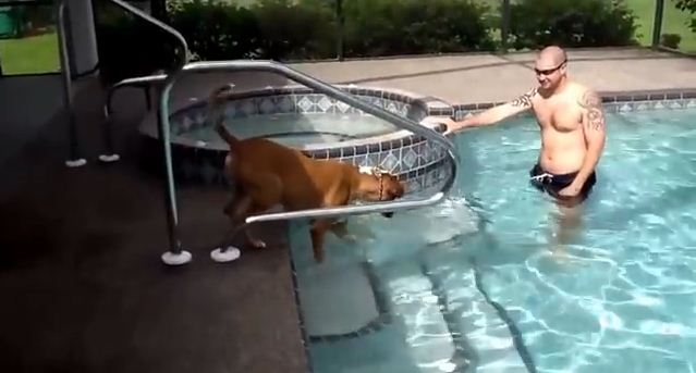A Terrified Dog Finally Takes The Plunge & Swims For The First Time