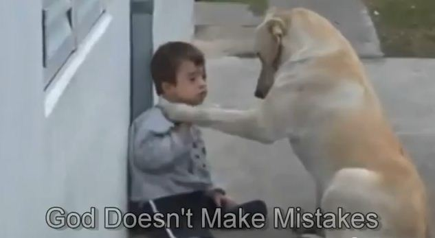 This Dog Places Her Paw On A Boy With Down Syndrome. What Happens Next Is Amazing In Every Way.