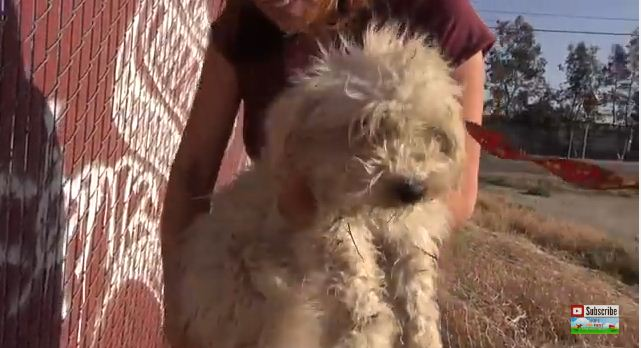 This Sweet Pup Is So Lucky To Have Been Found And Saved. Please Watch And Share So More Dogs Get Their Happy Ending :)
