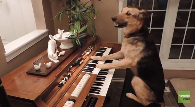 When A Family Rescued This Dog, They Had No Idea She Had This Hidden Talent