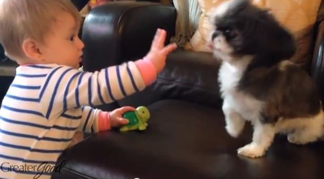 It's National High Five Day, And Our Furry Friends Know Exactly What to Do!