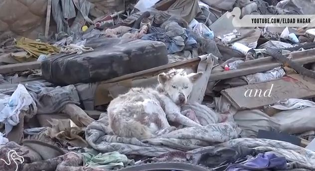 Watching These Homeless Dogs Get A Second Chance Is Why We Do What We Do