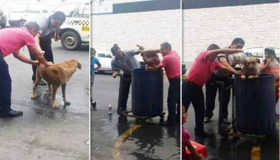 Stray Dog Receives Unexpected Gift