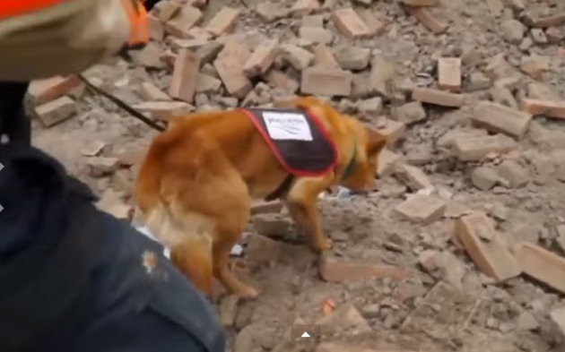 Breaking News: GoPro On Search & Rescue Dogs In Nepal Shows Unbelievable Devastation And Daring Rescues