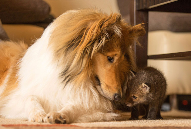 After His Mom Died In A Car Accident, This Cub Was Adopted By A Dog