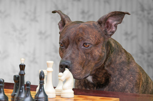 4 Ways To Cure Boredom And Increase Your Dog's Smarts