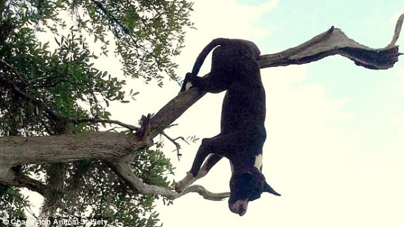 Dog Impaled on Tree Branch for 24 Hours Miraculously Survives