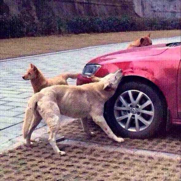 Street Dog Gets Revenge on Man Who Kicked Him