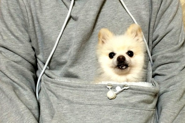 Now You Can Wear Your Dog Comfortably