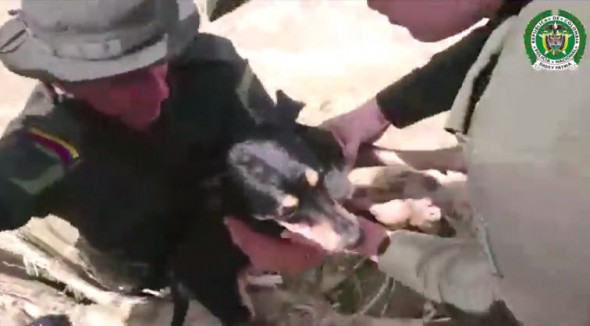 Heroic Officers Jump in Flooded River to Save Drowning Dog