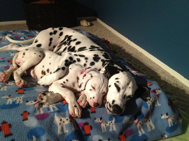 These Pooches Are Absolutely In LOVE With The New Family Puppies…Aww
