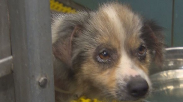 Man Dumps Sick Puppy in Stranger's Backyard