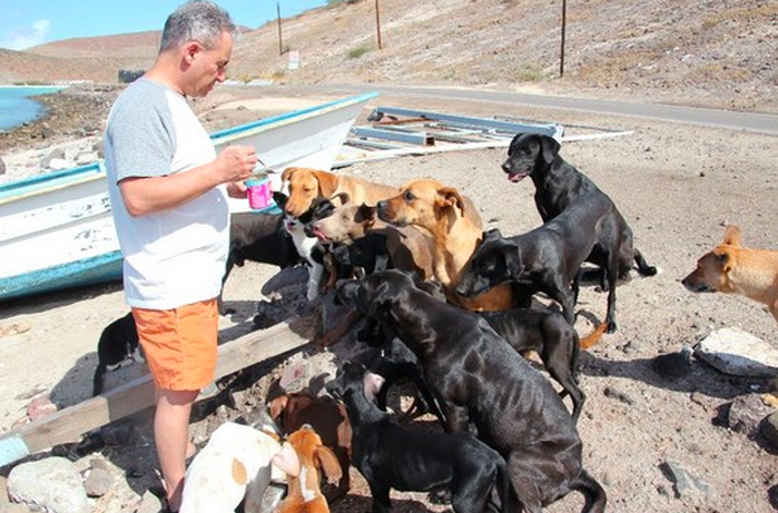Inspiring Couple Rescues Over 30 Dogs And Cats While On Vacation In Mexico – Incredible Story!