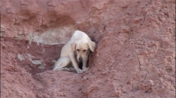 Firefighters Attempt Dog Rescue from 300 ft. High Cliff