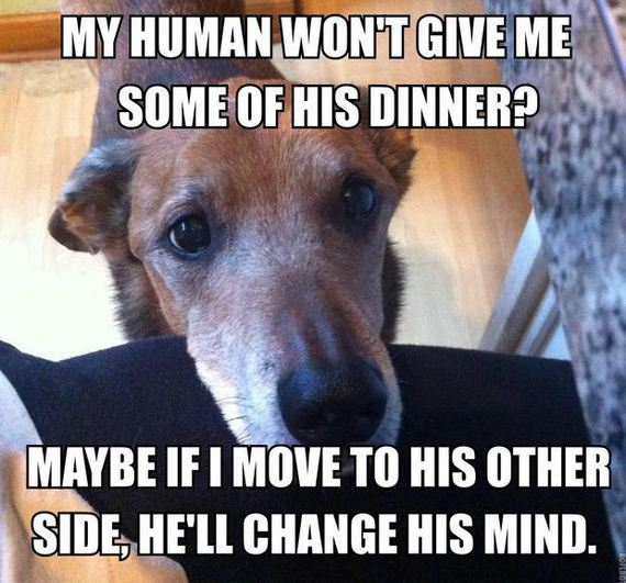 28-dog_owners_will_understand