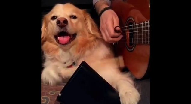 This Dog Provides The Perfect Accompaniment For His Guitar-Playing Owner