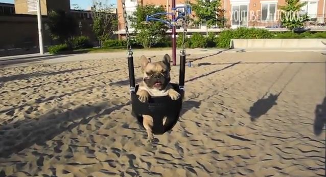 These Puppies On Swing Sets Will Make You Wish You Were A Kid Again