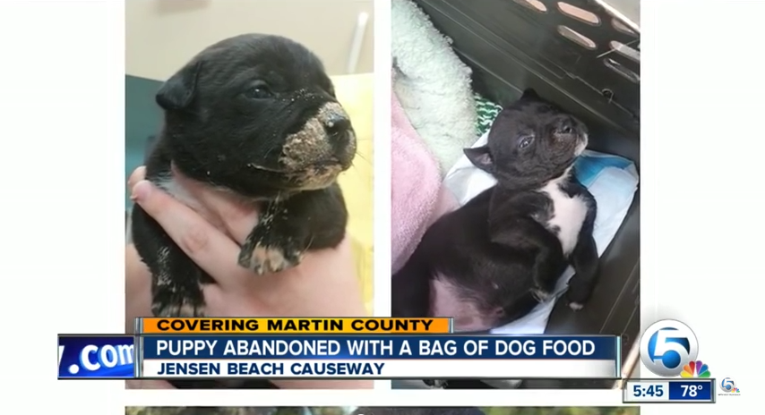 This Puppy Was Abandoned with a Bag of Food In a Dumpster. Watch This Cop Save Her Life!