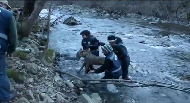 They Pulled An Injured Creature Out Of The Water. The Reason For Its Injuries Shocked Me