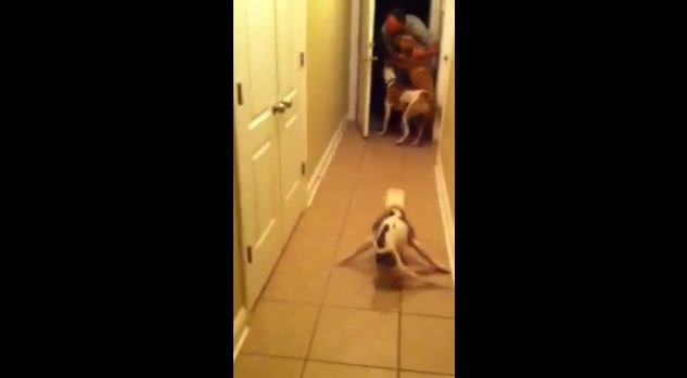 "Paralyzed Dog ""Runs"" to Reunite with Deployed Dad"