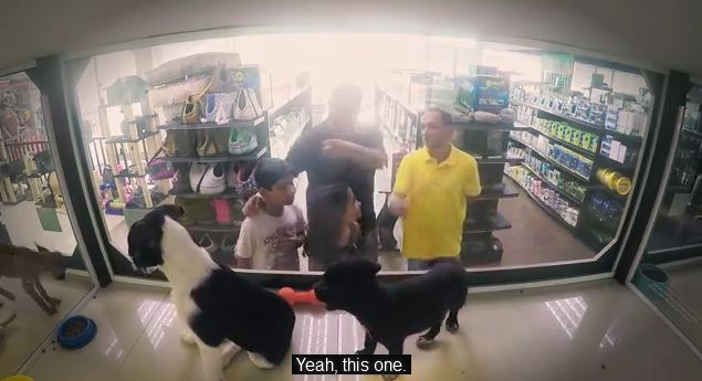 This Pet Store Lies About The Dogs They Are Selling, But The Reason Is Wonderful