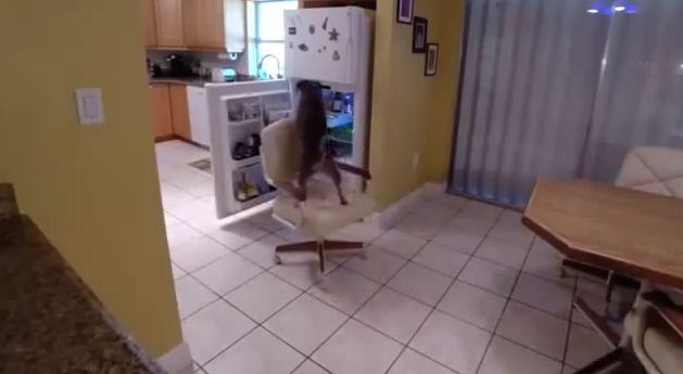 They Set Up A Camera To Find Out How The Heck Their Dog Got Food Out Of The Fridge