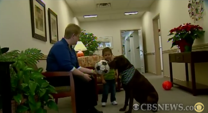 The Reason This Dog Is Wandering Around A Funeral Home Will Have You In Tears