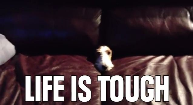 8 Dog Problems Humans Just Don't Understand