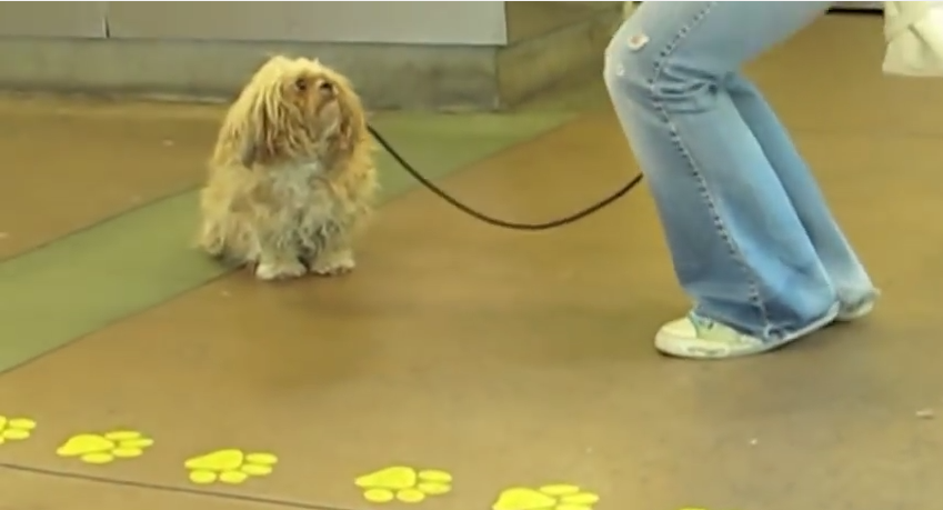 This Tiny Dog Was Left At A Shelter, But It's What Happened Next That Had Me In Tears