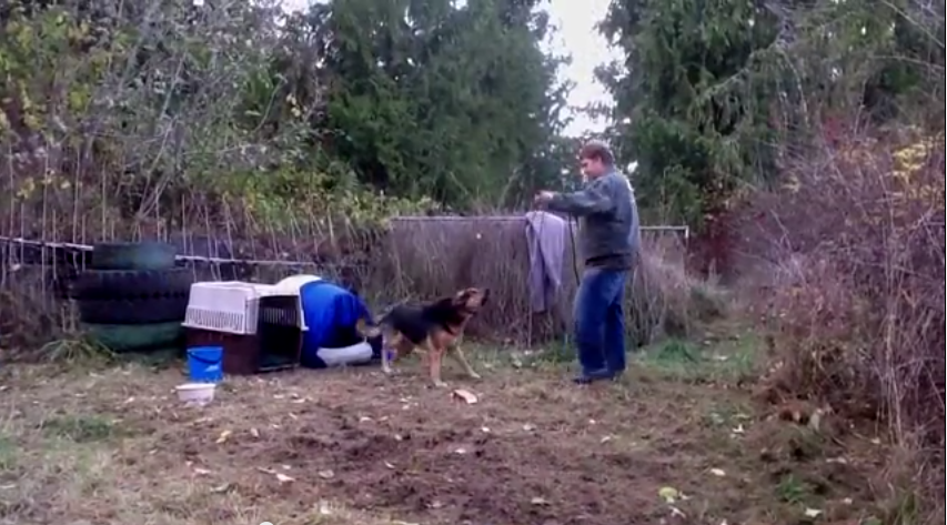 As Soon As They Rescued This Hostile Dog From His Chains, Something Miraculous Happened