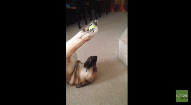 This Dog Shows Off Some Unbelievable Ball Handling Skills
