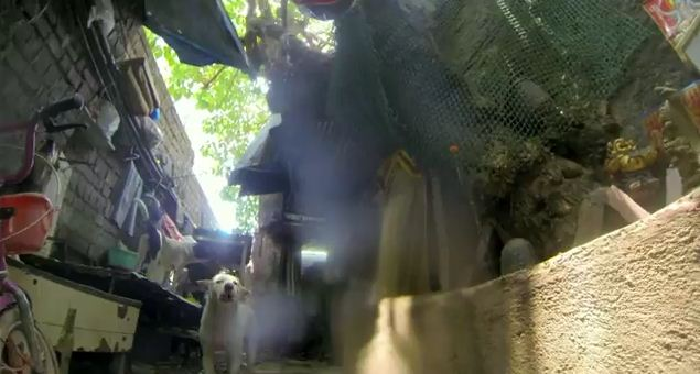 A Day In The Life Of A Street Dog Is Terrifying…Would You Survive?