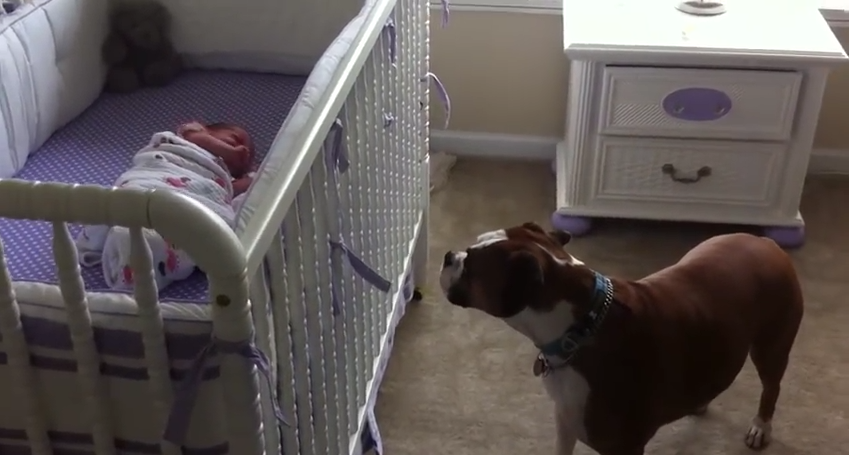 The Way This Dog Responds To Hearing A Newborn's Cry Will Melt Your Heart