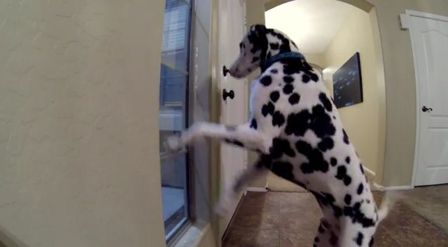 Keep Your Eye On What This Dog Does When Mom Comes Home…
