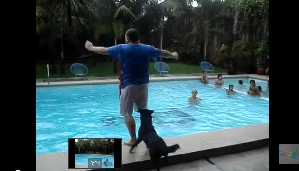 He Walks Over To The Pool, But Keep Your Eyes On The Dog Behind Him…