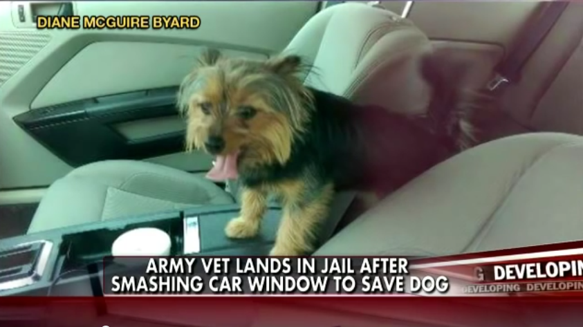 War Veteran Saves An Endangered Dog, Then Gets Arrested. Wait Until You See Why…
