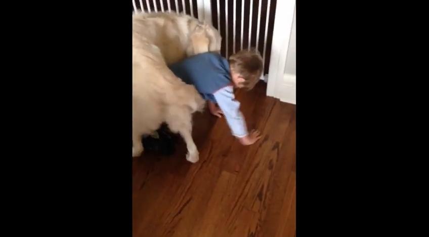 Dog Invents New Way To Hug His Favorite Human